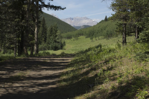 dyson trail0160